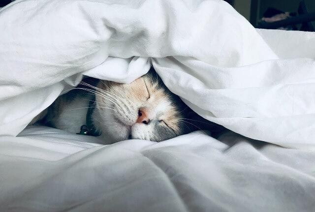 猫ブログでアフィリエイトして稼ぐ方法!